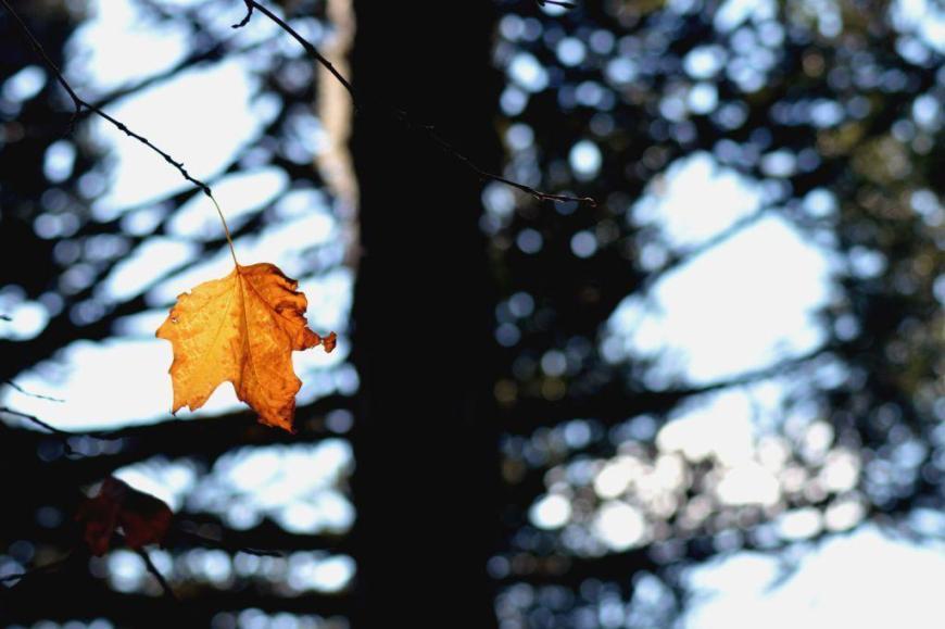 1008-Outono-Canela